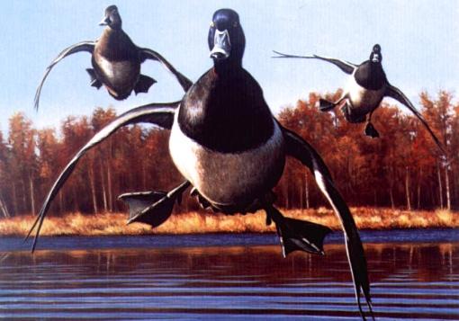 duck calls, duck commander, duck dynasty, goose calls, game calls, handcrafted duck and goose calls